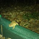 toad, toad fence